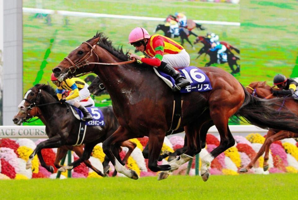 ม้าแข่งออนไลน์